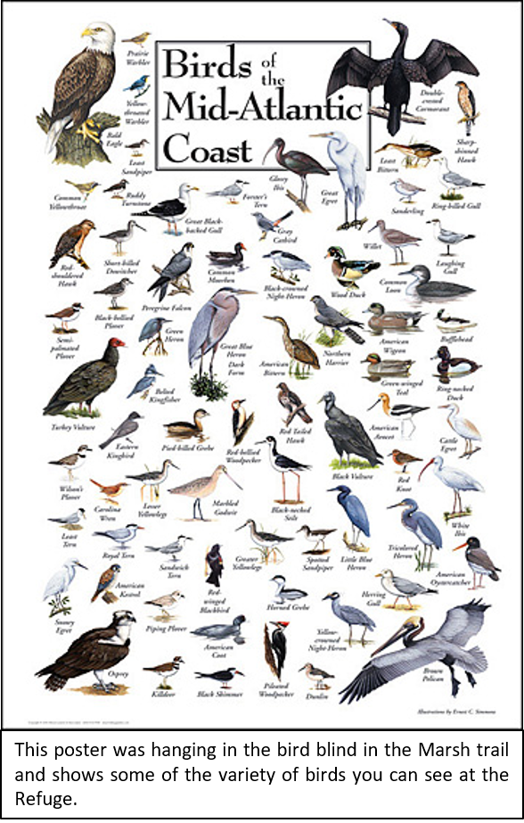 Bird poster with words