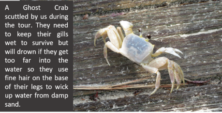 Ghost crab with words.jpg